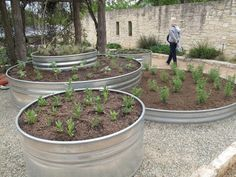 Galvanized stock tanks for raised beds in the garden