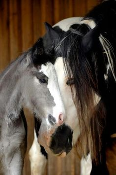Foal is mix of 4 Quarters= American Paint Horse, Pinto, Gypsy Vanner, Indian Horse Cute Horses, Pretty Horses, Horse Love, Beautiful Horses, Animals Beautiful, Animals And Pets, Baby Animals, Cute Animals, Horse Pictures