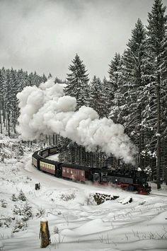 scentdelanature: Snow Train ..The Black... | Orchidaaorchid