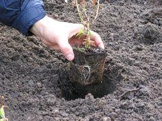 Une terre lourde et argileuse est souvent source de problèmes pour les jardiniers qui ne savent pas comment l'amender ni quels végétaux y planter. Il existe pourtant des astuces pour venir à bout d'un tel sol dans lequel un grand nombre d'espèces se plaisent. Découvrez notre sélection d'arbustes, de vivaces et d'annuelles adaptés à la plantation en terre argileuse.