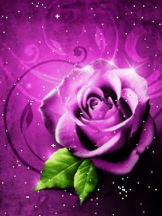 Cool High Definition Wallpapers Of Flowers For Mobile 2013