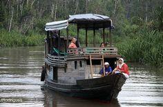 Menelusuri sungai skonyer menuju 3 tempat rehabilitasi dan konservasi menggunakan perahu tradisional klotok, taman nasional tanjung puting - kalimantan tengah