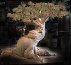 Resultado de imagen para CLAY TREE