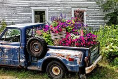 An old truck with flowers in its bed was photographed in Door County Wisconsin.