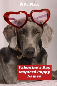 Give our list of names a read to find your new puppy the perfect Valentine's Day inspired name! Pet Holidays, Puppy Names, Getting A Puppy, New Puppy, Dog Care, Paper Dolls, Adoption, Finding Yourself, Valentines
