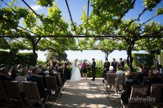Black Barn Winery New Zealand wedding by Hawkes Bay wedding photographers, Eva Bradley Photography. www.evabradley.co.nz