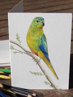 Orange Bellied Parrot wildlife art greeting card. by Josdesktop