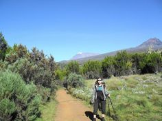 kilimanjaro+moorlands   ... and high ( - Picture of Mount Kilimanjaro, Kilimanjaro National Park