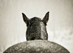 Natural Horse Care Tips for Winter: Pour warm water into buckets to encourage horses to stay hydrated and to prevent colic. You'll be shocked how much horses love this!
