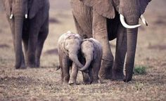 These baby elephant friends going for a fun stroll together. | 21 Photos That Will Turn Your Heart To Goo