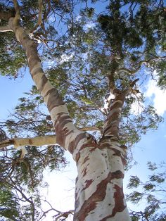 I grew up in rural victoria- love a gum tree