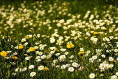 Spør en gartner: Ønsker meg et lettstelt bed uten ugress