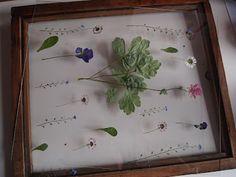 parizankounavikend: Rámovanie sušených kvetov