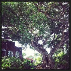 Montpelier Plantation, Nevis, US Virgin Islands