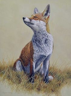 Oil, 49 x 39 cm, £875 - or spread the cost, interest-free over 10 months with Own Art. Part of The Natural Eye 2020, Society of Wildlife Artists Annual Exhibition, at Mall Galleries from 28 October to 8 November. Browse and Buy the whole exhibition online. #WildlifeArt #Fox #Animals #Conservation #AffordableArt #Drawing #Painting Nature, Printmaking, Fine Art, Drawings, Wildlife Artists, Wildlife Art, Painting, Sculpture, Art