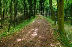 Elveszett erdei vasutak nyomába eredtünk Country Roads