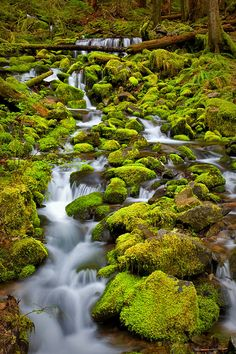 Wonderful stream through the moss along the Sol Duc Falls Trail, Olympic National Park, Washington
