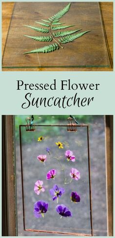 Learn how to make a pressed flower suncatcher with leaves and flowers from your own garden and picture frames from the dollar store.