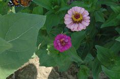 Teacher Communication - Early Childhood   Spring Garden Waldorf School Blog