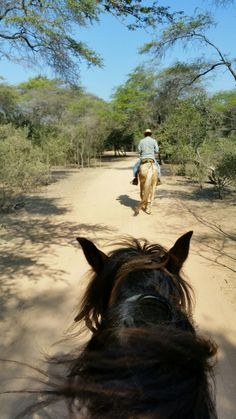 """Auf Paso Peruanos im """"Wald"""" Lambayeques Black Aesthetic Wallpaper, Aesthetic Wallpapers, Cute Cowgirl Outfits, Really Funny Pictures, Like Animals, Beautiful Horses, Equestrian, Cool Photos, Iphone"""