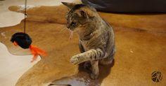 🐾 Welche Spielangeln sind gut für meine Katze? Mit Video Tricks, Sport, Animals, Animals Dog, Pet Dogs, Games, Funny, Life, Deporte