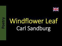 Poetry in English - Sanderlei Silveira: Carl Sandburg - Windflower Leaf