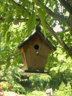 Bird house in the bird sanctuary