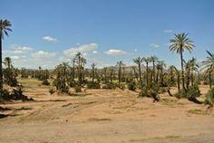 Marrakesh Palmer