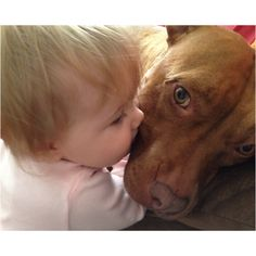 Pit bull love<3