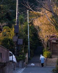 「北鎌倉の日常をパチリと。 ゴミ袋を白い犬だと思い『おばあちゃんの側を離れないんだなー』とほのぼの目線で見てました… 五秒ぐらい見ててゴミ袋だと気付いたアホな自分ですw #鎌倉 #北鎌倉 #日常生活 #snapshot #秋 #team_jp_東 #team_jp_ #ig_japan #icu_japan…」