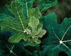 Emerald #VQ Colour