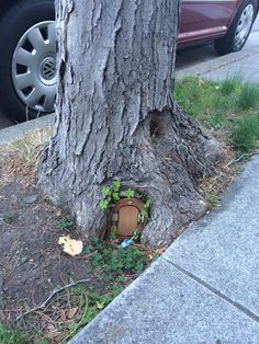 A touch of enchantment: A fairy door in a Berkeley tree