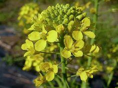 Floricultura Multiflora Fernandopolis: As Flores da Horta