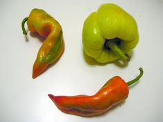 peproni ungheresi da  paprika
