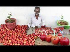 GRAPE JUICE Prepared by my Daddy ARUMUGAM / Village food factory - YouTube
