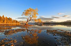Google+     Amal Rika Discussion  -  11:36 AM  #Lake       On the edge of Lake Wanaka, there stands a lone tree that grows just off the rocky shore.   Golden Dawn | By Elia Locardi #tree   #wanaka   #water   #goldhour   #lake   #sunrise   #reflection   #landscapephotography   #nature   #newzealandphotography
