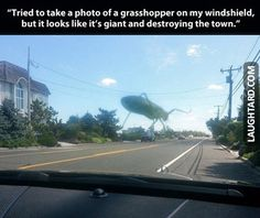Tried to take a photo of a grasshopper on my windshield #lol #funny, #haha, #funnypics, #laughtard