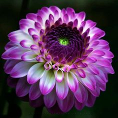 These inspirational flower quotes have some of my favorite motivational messages on stunning flower photos. Flowers Nature, Exotic Flowers, Amazing Flowers, Colorful Flowers, Purple Flowers, Beautiful Flowers, Purple Dahlia, Flower Quotes Inspirational, Dahlia Flower
