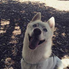 Happy to be at the park! - El Chorro Regional Park - San Luis Obispo, CA - Angus Off-Leash #dogs #puppies #cutedogs #dogparks #angusoffleash #sanluisobispo #california