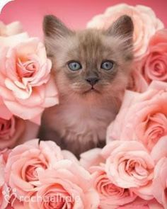 ,Pretty flowers and kitty. Follow me at http://www.pinterest.com/cattreehouse/