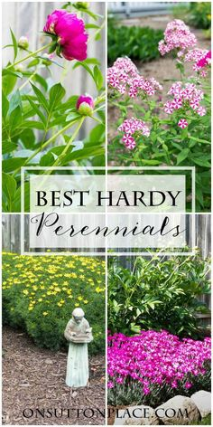With just a little research and knowledge of your planting zone you can achieve a beautiful, healthy garden in no time. Here are 5 great perennials that will get you started or be great additions to existing plants. #spon