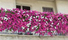 Jardín de flores en el balcón (3)