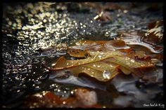 Automne Autumn Feuilles Leaves Gouttes dansloeildekro