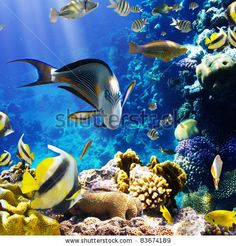 stock photo : Photo of a tropical Fish on a coral reef
