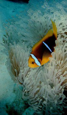 .Amazing Underwater World