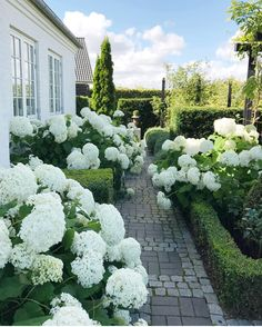 Garden & Landscaping - Ideas to design the garden or the garden beds . - Garden & Garden Planning – Ideas to design the garden or garden beds gardening # - Garden Cottage, Garden Beds, Garden Path, Back Gardens, Outdoor Gardens, Hydrangea Annabelle, Landscape Design, Garden Design, White Gardens