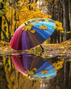 Good Morning Beautiful Pictures, Beautiful Images, Scenery Pictures, Nature Pictures, Umbrella Photography, Nature Photography, Smell Of Rain, Umbrella Art, Autumn Scenery