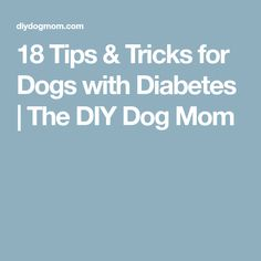 18 Tips & Tricks for Dogs with Diabetes Diabetic Dog Food, Dog Toothpaste, Are Essential Oils Safe, Oils For Dogs, Dog Care Tips, Dog Hacks, Dog Training Tips, Dog Mom, Diy Dog