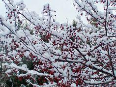 Winter's color
