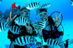Many scuba divers who take year end trips to the islands to go diving only head off with the intention of occasional indulgence. They do not seem to find the need to go beyond the Open Water Diver Course which is a prerequisite if you want to explore beneath the waves of the sea. http://www.idc-thediveacademysamui.com/idc-staff-instructor.html